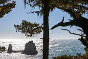 Sun glints off the Pacific. Point Arena-Stornetta Public lands