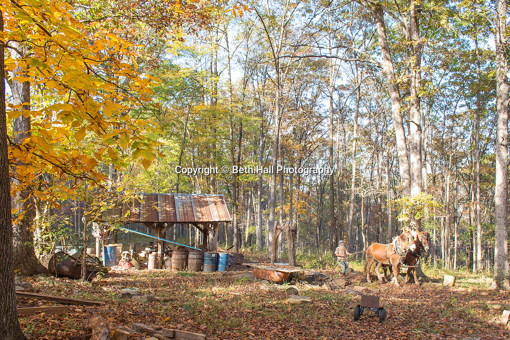 Robert Runyon walks his mules Jasper and Jenny through his yard at their home in Sugar Tree Hollow in Winslow, Arkansas, for Out Here Magazine. Photo by Beth Hall