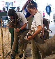 "Lila Smith with ""Toga"" and Ashley Higgins with ""Winlo""  wait their turn to show their 3-5 year Toggenburgs during the 4H Fair at the Belmont Fairgrounds on Saturday.  (Karen Bobotas/for the Laconia Daily Sun)"