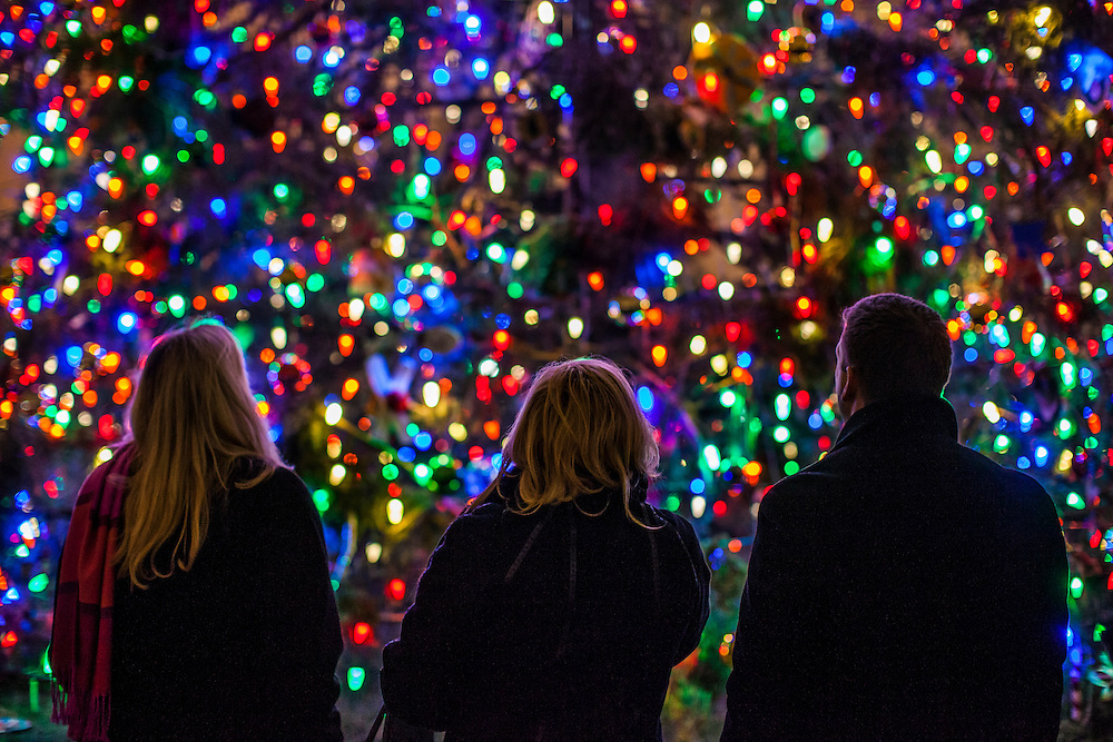 WASHINGTON, D.C. - December 2: Visitors look at the U.S. Capitol Christmas Tree after it was lit during a ceremony in Washington, D.C. on December 2, 2014. (Photo by Samuel Corum / Anadolu Agency)