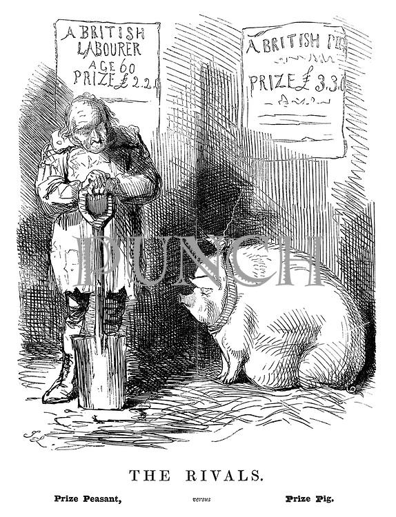 The Rivals. Prize Peasant, versus Prize Pig.