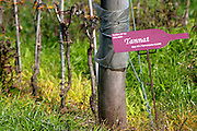 Vines pruned for winter and a sign saying it is Tannat grapes. Bodega Pisano Winery, Progreso, Uruguay, South America