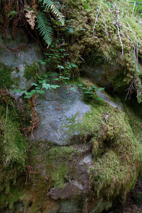 Rock Face, North Cascades National Park, Washington, US