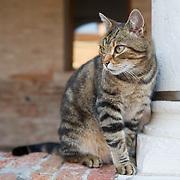 Venetian Cats - Gatti di Venezia Cats in Venice