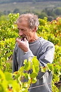 Christian Vache, owner and winemaker. Tasting a grape.  Domaine la Monardiere Monardière, Vacqueyras, Vaucluse, Provence, France, Europe