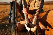 Namibia Oryx Hunt