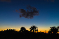The moon rises over palm scrubland shortly after sunset at Jonathan Dickinson State Park, Hobe Sound (Jupiter), Florida. WATERMARKS WILL NOT APPEAR ON PRINTS OR LICENSED IMAGES.