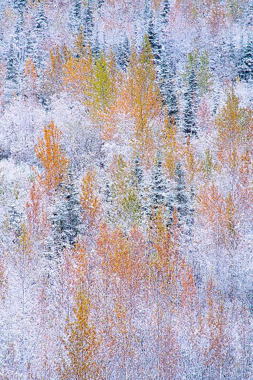 Autumn design after a snowstorm, Denali National Park, Alaska, USA