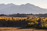 Humboldt-Toiyabe National Forest.  California. September, 2016.