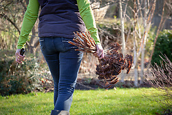 Clearing and tidying up borders -  cutting down and removing sedum seedheads