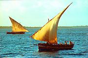 KENYA, EAST COAST a coastal sailing dhow off Lamu Island along the Indian Ocean coast of Kenya, with its traditional Swahili culture