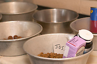 food and medicine prepared for dogs at a kennel