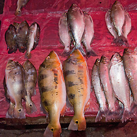 Fish from the Amazon River await sale in an outdoor market in upper Belem, a crowded neighborhood in Iquitos, Peru.
