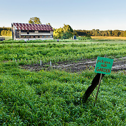 """The """"Pick your own"""" garden at the Crimson and Clover Farm, Northampton, Massachusetts."""