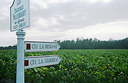Vineyard. Also owner of Ch la Becasse and La Garricq Chateau Paloumey, Haut Medoc, Bordeaux, France.