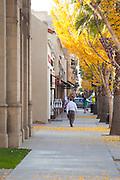 Man Walking on Sidewalk in Pasadena During Fall in the Afternoon