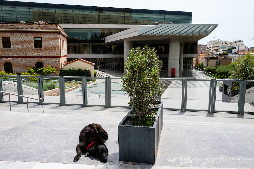 Athens, Greece. Dog in front of the new impressing Acropolis museum.