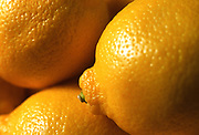 Close up photograph of a group of lemons