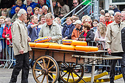 Cheese Inspector Testing A Cheese Wheel, Alkmaar, Netherlands