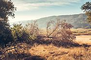Fallen, not burnt. Between Lake Casitas and Highway 150, in Ojai, California. ©CiroCoelho.com. All Rights Reserved.