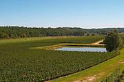 A view over the vineyard, a pond for water control and horses in the background - Château Pey la Tour, previously Clos de la Tour or de Latour, Bordeaux, France