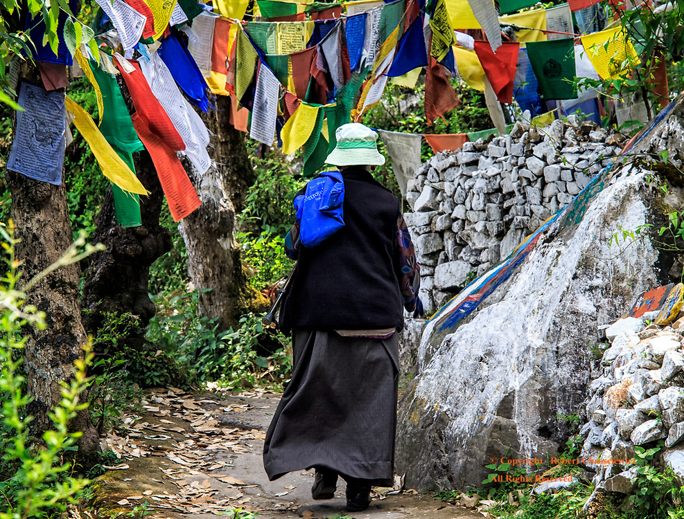 Buddhist Pilgrimage: A woman makes a solitary pilgrimage along a path strewn with prayer flags, to the Buddhist Dalai Lama Temple Complex that is nestled in the tranquil forests of McLeod-Ganj, India.