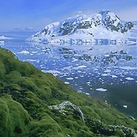 ANTARCTICA, Mossy slope above Paradise Bay, near Argentina's Almirante Brown Base,  Antarctic Peninsula.