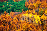 Colorful autumn forest with yellow and orange trees