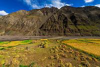 Farmers harvesting barley, near Gyangze, Tibet (Xizang), China.