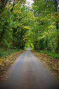 Deserted empty tree-lined country lane in autumn time in The Cotswolds, Oxfordshire, United Kingdom