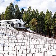Sierra View General- Delfino Winery (snow edition)