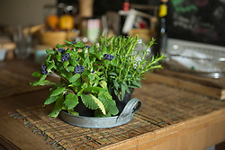 Flower pot on wooden table at home, Munich, Bavaria, Germany