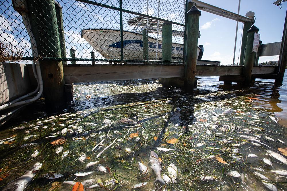 FIshkill clean up workers in Sanible Island, Florida. fish kill, fishkill, Florida, red tide, blue green algae, water crisis, environmental crisis, south west Florida, gulf coast, algae, toxic algae,