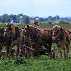 Ronks, PA / USA - June 27, 2017: An Amish farmer in Lancaster County uses a team of draft horses to cut and harvest hay.