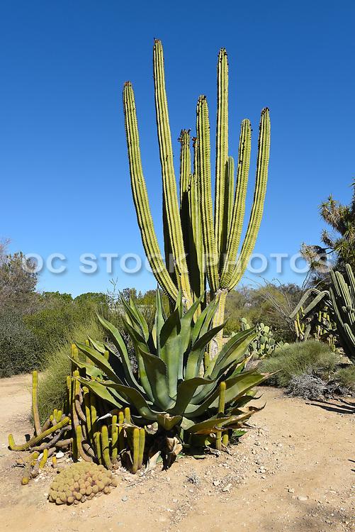 Desert Plant Landscape