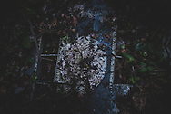 On the jungle floor at the old World War II airfield at Tadji on the outskirts of Aitape in Papua New Guinea, the Royal Australian Air Force roundel insignia is visible on a wing of an abandoned Beaufort aircraft.<br />(July 19, 2017)