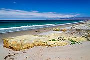 The beach at Skunk Point, Santa Rosa Island, Channel Islands National Park, California USA