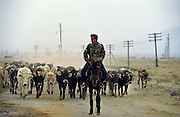 Ashgabat, Turkmenistan, October 1997..A farmer herding cattle in the fields outside the Turkmen capital. Poverty-stricken, but rich in oil and gas resources, this Central Asian former Soviet republic is ruled by the autocratic President Saparmurat Niyazov, or Turkmenbashi as he has renamed himself...............Hollandse Hoogte