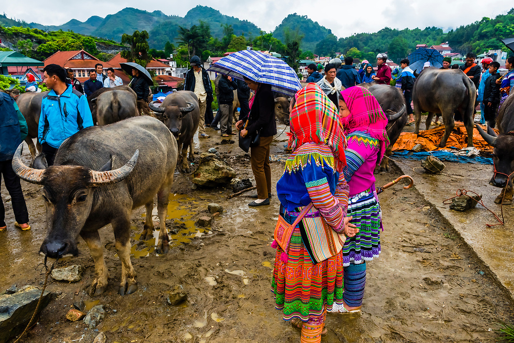 Flower Hmong (hill tribe) women at the livestock market, Sunday market at Bac Ha, northern Vietnam. Every Sunday ethnic minorities come from surrounding villages and hills to buy and sell everything from homemade wares to farm animals such as chickens, pigs, horses and buffaloes.