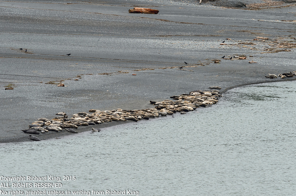 Seaseape photographs Pacific Ocean from Kalmath River Estuary, CA
