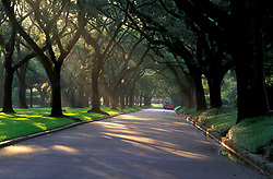 Stock photo of an oak tree lined street early in the morning at sunrise
