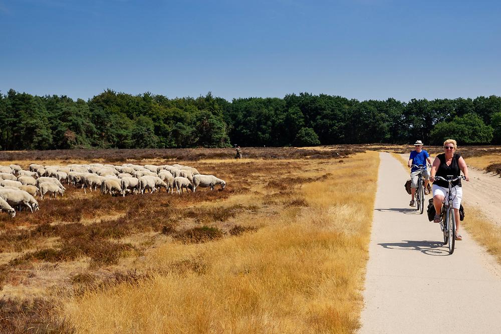 Nederland, Ede, 27-07-2018<br /> Fietsers passeren bij Ede een schaapskudde op de Ginkelse Heide, onderdeel van de Veluwe.<br /> <br /> Near Ede cyclists pass a sheep hurdle at the moorland on the Veluwe.<br /> Foto: Bas de Meijer / De Beeldunie