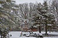 First Snow. Autumn Backyard Nature in New Jersey. Image taken with a Leica T camera and 11-23 mm lens (ISO 400, 23 mm, f/5.6, 1/400 sec)