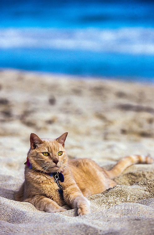 Cat relaxing at the beach *****Property Release available