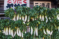 """Daikons or Japanese radishes, are the most popular vegetable in Japan. Pickled, grated, or raw, they are found in nearly every Japanese meal.  Daikon literally """"big root"""" is a type of edible radish known for its very long white root.  The common variety is grown in the shape of a very large carrot. In Japan many kinds of pickles are made of daikon.  Oden, a popular winter soup dish, also features daikon as a principle ingredient.   Outside of Asia they are known as """"Fodder Radish"""".  Its Latin name is Raphanus sativus"""