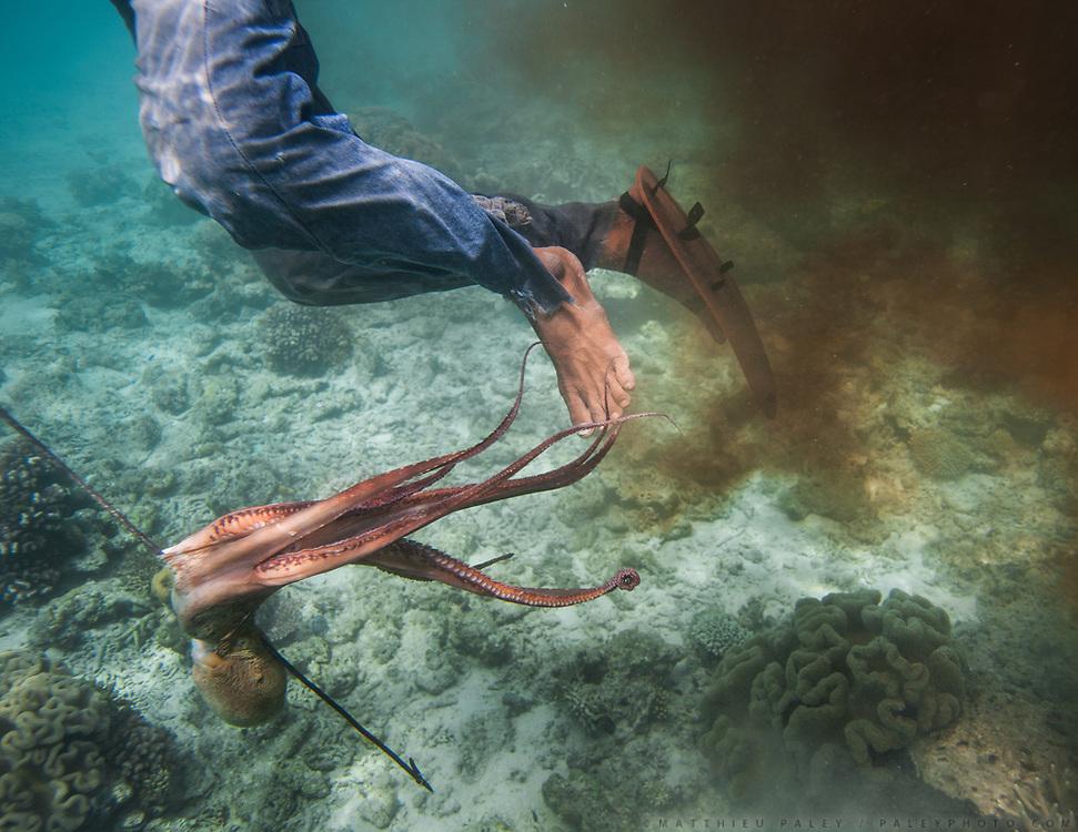 Catching octopus. Fisherman named Tarumpit fishing with duggout canoe.