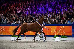 342, Mowgli VOD<br /> KWPN hengstenkeuring - 's Hertogenbosch 2020<br /> © Hippo Foto - Dirk Caremans<br /> 01/02/2020