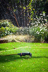 Watering a lawn with a sprinkler