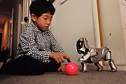 First generation AIBO robot pet. Although they say it is only a robotic pet, the Nozue family in Yokohama acts like it is a member of the family. This is especially true of Mr. Nozue. During our two-hour Sunday morning visit, the family began by explaining that they had bought the Aibo through a nationwide lottery draw. They had wanted a real dog but their apartment building rules do not allow real pets so Mr. Nozue accessed the Sony site from work and applied for the lottery. His wife, Yoshini, says she never expected that they would actually buy the robotic pet because of the expense involved, they paid $2,500. AIBO is Japanese for buddy. Sony Corporation manufactures the robot. Photographed at the home of the Nozue family, Yokohama, Japan..