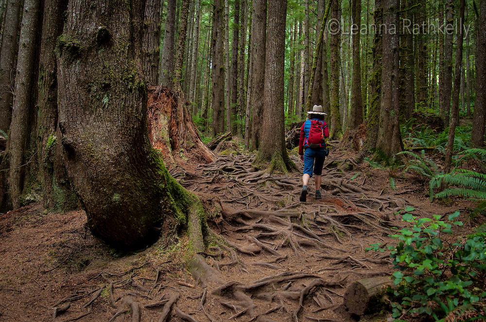 Tree roots line the trail to Mystic Beach, which is part of the Juan de Fuca trail on the West Coast of Vancouver Island.